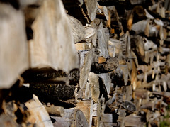 wood's wall (apprendistasimo) Tags: wood brown macro nature wall canon eos natura 400d ysplix