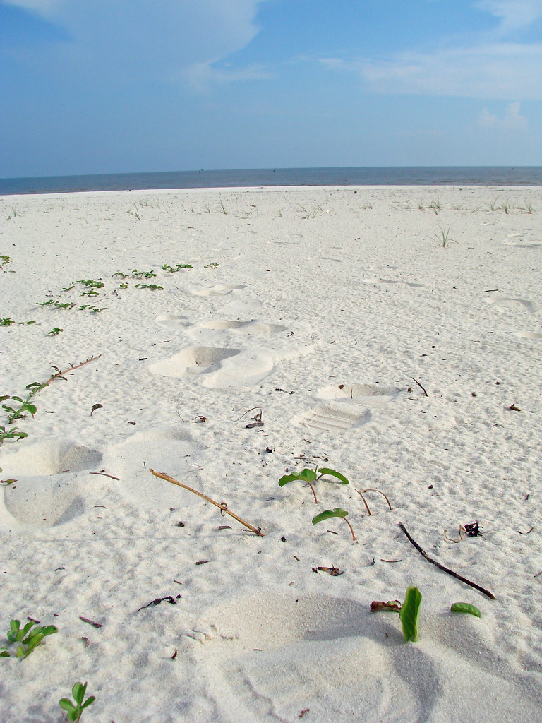 Gulf of Mexico - white sand beach