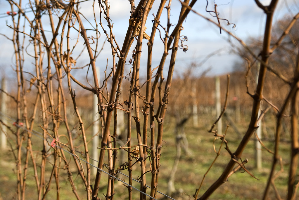 winter vinyard vines