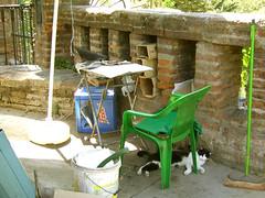 El gato y la paloma (Antfama) Tags: chile santiago verde green cat chair dove paloma gato silla resting santalucia escoba cerrosantalucia descansando