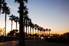 Shoreline Park, Long Beach, California (Namisan) Tags: california park sunset usa tree dusk shoreline longbeach treeline shorelinepark nightfall