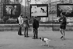 this doesn't concern me (S amo) Tags: people blackandwhite bw dog chien paris photo noiretblanc nb luxembourg somalia gens witness jardinduluxembourg spectateur somalie tmoin onephotoweeklycontest