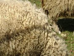 bandit's lamb 006