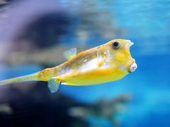 Under the Sea (Bert Tillema) Tags: ocean sea fish holland 50mm f14 small 14 arnhem thenetherlands nikkor burgerszoo nikond300