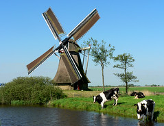 Nationale Molendag 2008 (sydandsaskia) Tags: nationalmillsday windmill cows nationalemolendag sky wind water whatalife mymill miller cowsinfield cowsinpasture frisian broeksterwoude friesland frysln broeksterwld netherlandswindmill frieslandwindmill broekmolen broekpoldermolen broekpoldermole broekmole