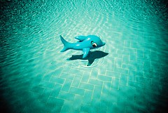blue whale (the brownhorse) Tags: shadow holiday water pool turkey hotel shark lomo xpro lac lomolca swimmingpool inflatable crossprocessing xprocessed bluewhale autaut aplusphoto