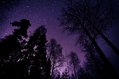 Wonders of Nature (neatmummy) Tags: trees sky silhouette night photoshop canon finland dark stars eos silhouettes lot astronomy dreamy processed plenty 5dmarkii
