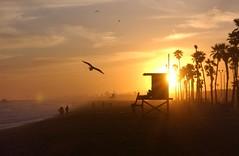 Sunset 1 (alackoffocus) Tags: sunset newportbeach socal balboa oc lifeguardtower