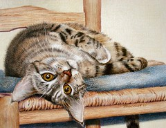 Rio Prismacolor Pet Portrait (gossamerpromise) Tags: art cat chair upsidedown drawings prismacolor coloredpencil petportrait lookingatyou yourmasterpaintings