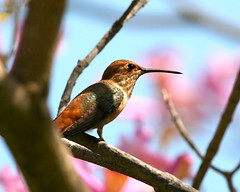 In The Midst (Don Baird) Tags: beautiful beauty bravo hummingbird beak arboretum beep wisdom hiding humming naturesfinest onlythebestare