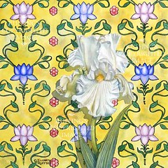 """Music Box"" White Iris on Yellow, Print by Elizabeth Ruffing"