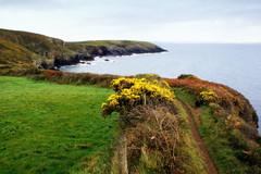 Coastal Path, St Non's (annicariad) Tags: wales cymru wfc blueribbonwinner annicariad welshflickrcymru diamondclassphotographer scenicsnotjustlandscapes