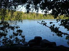 Lilla Stamsjn (skotte28) Tags: trees summer lake water sweden sverige vatten sommar sj lerum