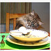 Cat image, photo or clip art