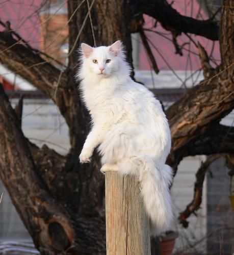 pretty and beautiful cute white cat