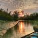 Bangladesh's Sundarbans at dawn