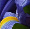 ~ b e l l a     luna (Anne Strickland) Tags: bravo bec excellence firstquality flowerotica abigfave diamondclassphotographer megashot thegoldenmermaid ~amabile~ obq