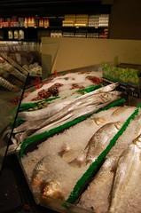 fishie fishie fishie fish