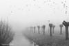 20161228_nva_6040_mist_bw-web (nicolevanas) Tags: alphenaandenrijn fog koude landschap landschape mist mistig nicolevanasfotografie stedelijklandschap winter
