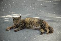 "(Tolga ""Musato"") Tags: cat kitty kedi musato"