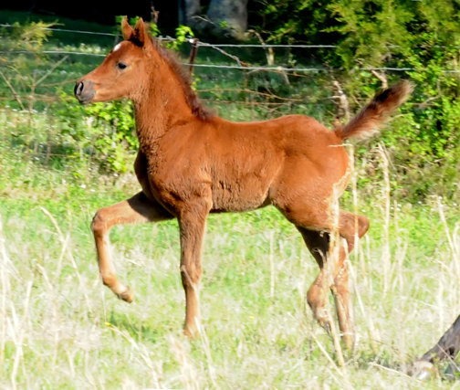 fuzzy filly