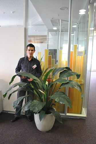 Растительность в Яндексе