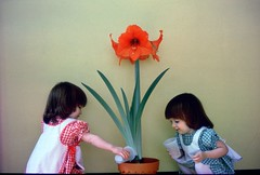 Chaya and Michelle 38 years ago (Len Radin) Tags: kids children twins awesome blossoms amaryllis amarylis ninos smörgåsbord themoulinrouge interestingness3 10faves i500 fineartphotos diamondclassphotographer flickrdiamond theunforgettablepictures colourartaward thebestofyourshots top20vivid alphabetphotomino mimamorflowers