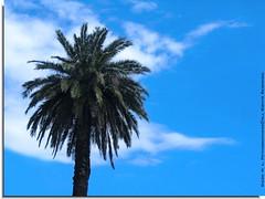 Libertad... / Liberty... (* D i e g o *) Tags: sky naturaleza cielo palermo palmera naure supershot