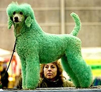 A Green Watchdawggie - a rare breed!