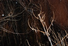 candleabra (jamesjohnsonart) Tags: november snow rain night evening vines surrealism breath dream surreal creepy surrealist redsky unreal firstsnow dreamlike aura sleet otherworldly disorienting