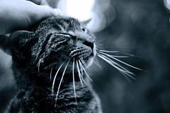 (ojaipatrick) Tags: cat gato kedi