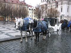 IMG_4435 (Staré Město, Hlavní Mesto Praha, Czech Republic) Photo