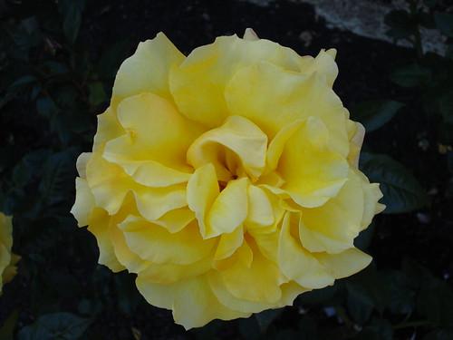 rosas en el botanico