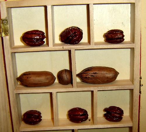 nut museum