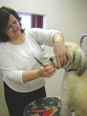 #2 Stranger: Rebecca, Clipping a Dog