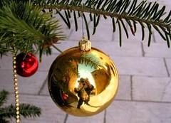 fotografando il natale ... (guendaeio (orasoloio)) Tags: christmas macro reflection yellow ball gold colore noel giallo tuscany dettagli toscana natale riflessi oro sfera canonpowershotg2 colourartaward