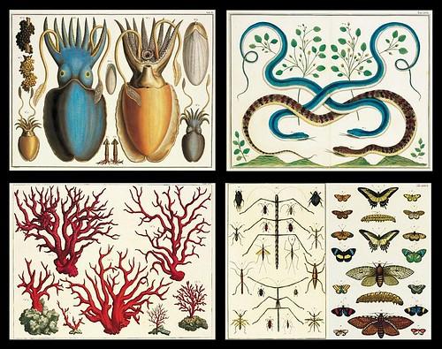 Albertus Seba Cabinet of Curiosities