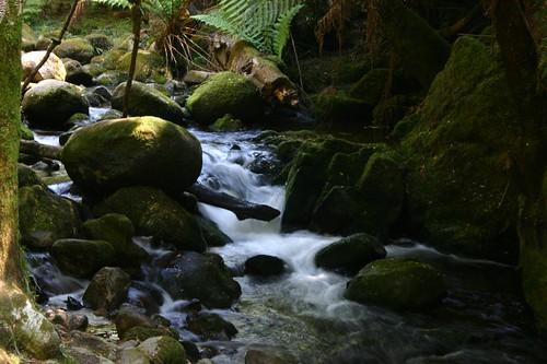 St. Columba Falls. NE Tasmania.