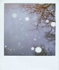 constellation (violetjulia) Tags: trees winter sky snow forest square polaroid branches 600 constellation lovenotes unature