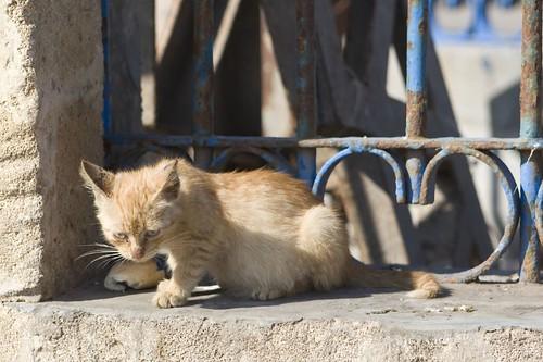 Moroccan Cat 6