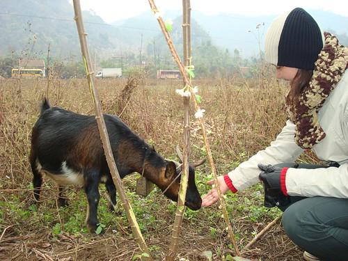 http://farm3.static.flickr.com/2070/2309276058_447284936a.jpg