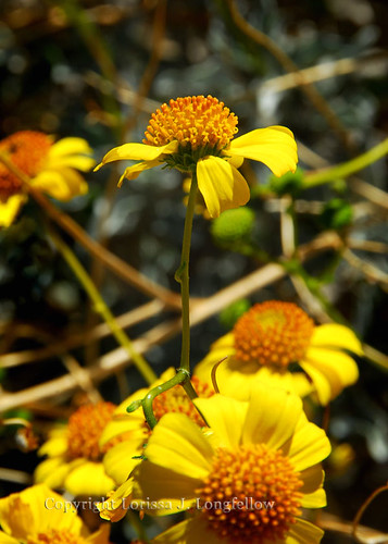 Wild-blooms-15