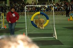 Dog Show 119