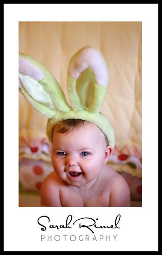 web bunny 02