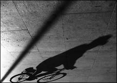 la via dell'ombra, o l'ombra nella via? (amemainda) Tags: strada ombra bicicletta bnvitadistrada sfidephotoamatori kubrickslook