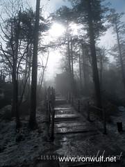 Foggy trail at Emeishan