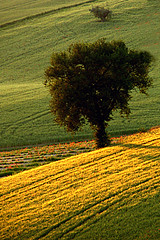 (raffaphoto©) Tags: trees italy tree nature landscape spring country marche