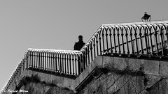 The man on the stairs (patrick_milan) Tags: escalier stairs noiretblanc blackandwhite noir blanc monochrome nb bw black white street rue people personne gens streetview homme man viril beau boy garçon beautiful portrait face candide brest