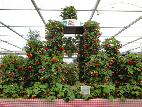 Ken Muir Strawberry Display