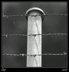 Soledad... (z-nub) Tags: blackandwhite bw blancoynegro digital zoe dof noiretblanc pentax bn minimal minimalismo  espino minimalista alambre znub pentaxk100d zoelv formatocuadrado bnysimilares cuadraditas cuadradita zoelpez cuadradosverticales sinacento